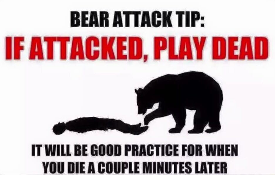 bear-attack-tip-funny-picture.jpg